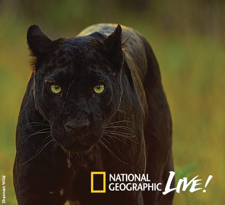 National Geographic Live: Pursuit of The Black Panther at Benaroya Hall